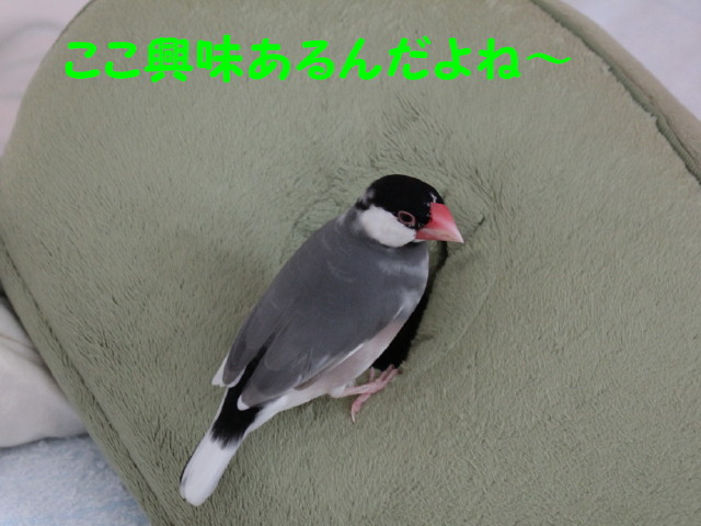 b0158061_23282281.jpg