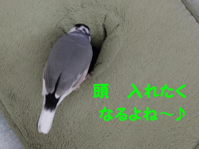 b0158061_23284383.jpg