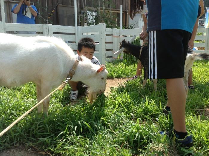 高柳小アートクラブ  山羊さんを描く_c0267580_12113182.jpg