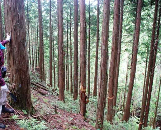 山林にも夏_f0221707_181468.jpg