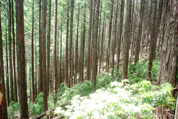山林にも夏_f0221707_1835150.jpg