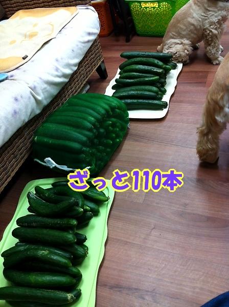 緊きう・きうり祭り_b0067012_0121143.jpg