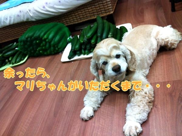 緊きう・きうり祭り_b0067012_0184256.jpg