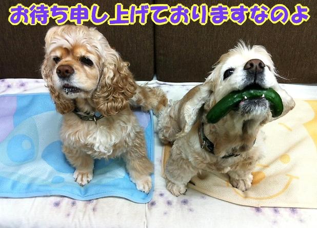 緊きう・きうり祭り_b0067012_0195845.jpg