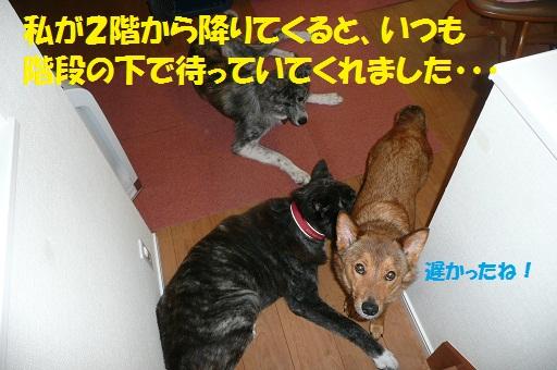 f0121712_4553282.jpg