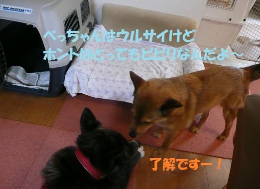 f0121712_543117.jpg