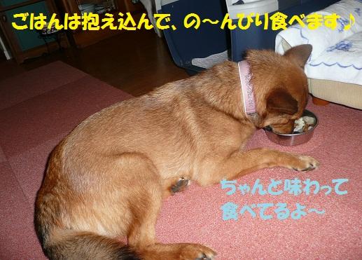 f0121712_58440.jpg