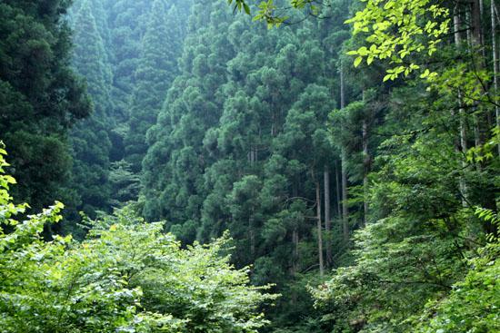 新日本風土記 京都鴨川2_e0048413_1742177.jpg