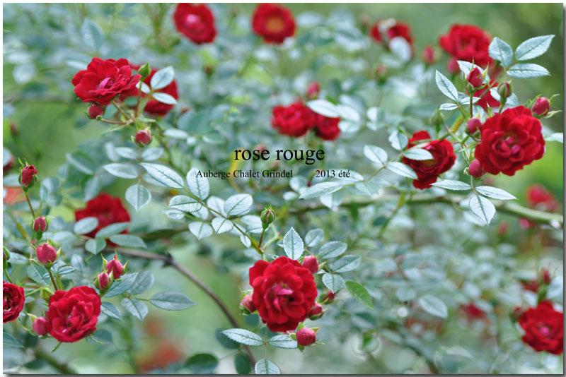 赤い薔薇_d0109415_12571696.jpg