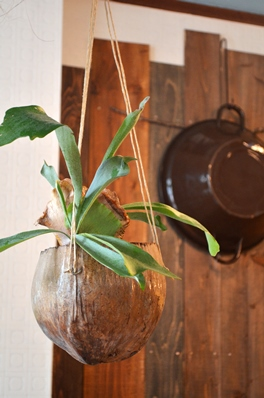 吊るし緑と壁かけ緑_d0263815_16504990.jpg