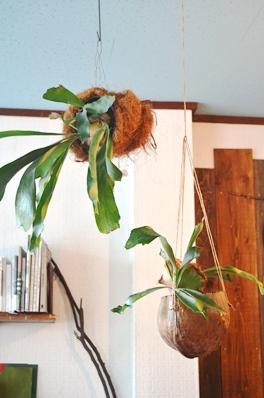 吊るし緑と壁かけ緑_d0263815_16525461.jpg