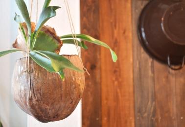 吊るし緑と壁かけ緑_d0263815_1735472.jpg