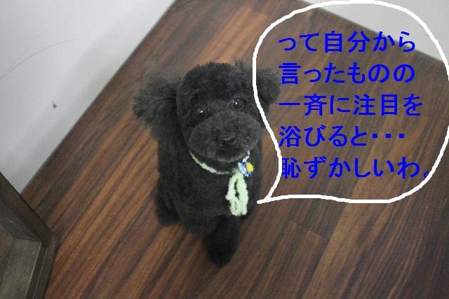 b0130018_22431775.jpg