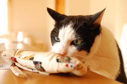 またたび祭りプレ企画!ヒト・猫おいしいしまねこ便♪_b0259218_0202852.jpg