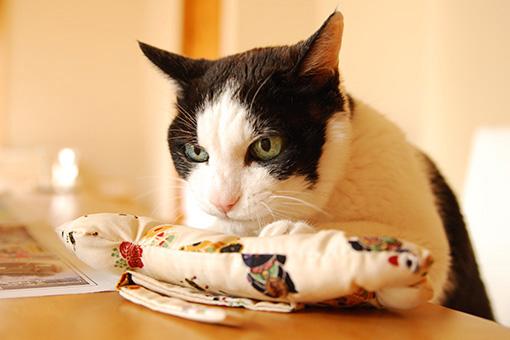 またたび祭りプレ企画!ヒト・猫おいしいしまねこ便♪_b0259218_0203242.jpg