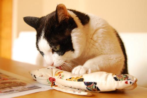 またたび祭りプレ企画!ヒト・猫おいしいしまねこ便♪_b0259218_0204176.jpg