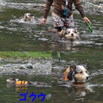 またまた川遊び_e0270846_1563821.jpg