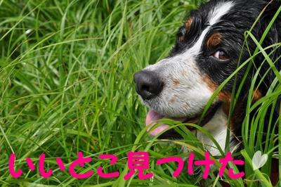またまた川遊び_e0270846_1644713.jpg
