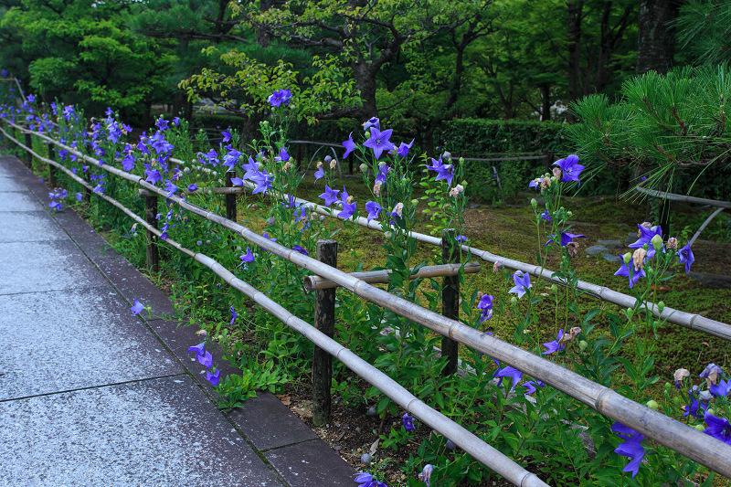 初夏の花咲く智積院_f0155048_18393833.jpg