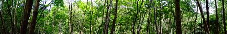 会員全員で孝子の森散策_c0108460_20352818.jpg