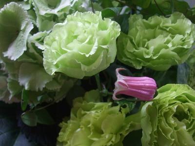 オークリーフ(紫陽花&クレマチス&トルコキキョウ)_f0049672_13184136.jpg