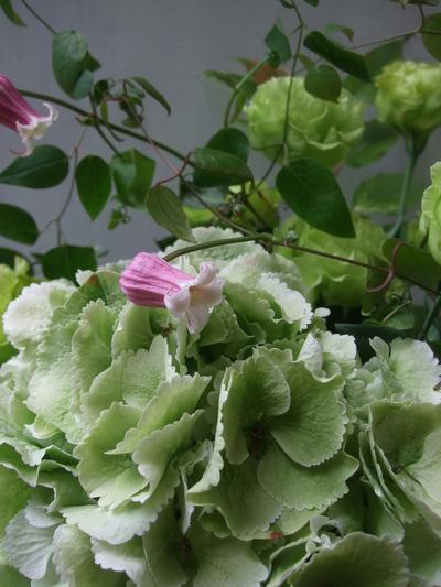 オークリーフ(紫陽花&クレマチス&トルコキキョウ)_f0049672_13191678.jpg