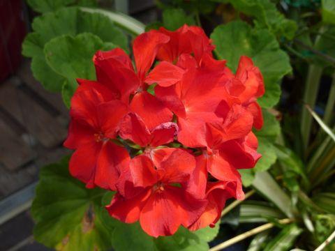 綺麗な花達_c0177195_12402196.jpg