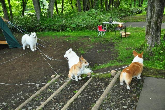 古山貯水池自然公園オートキャンプ場_f0212597_13145117.jpg