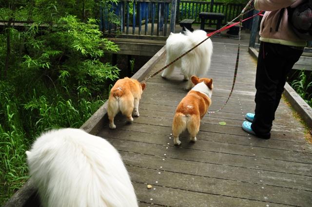 古山貯水池自然公園オートキャンプ場_f0212597_13212627.jpg
