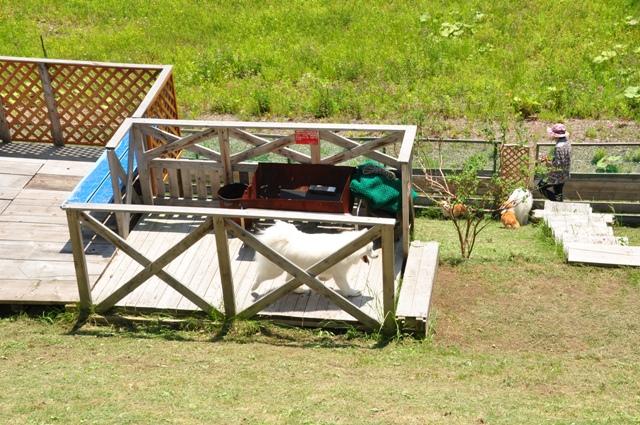 古山貯水池自然公園オートキャンプ場_f0212597_1333566.jpg