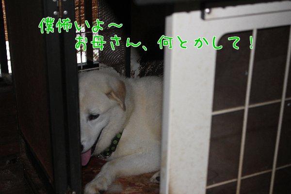 b0073110_22494152.jpg