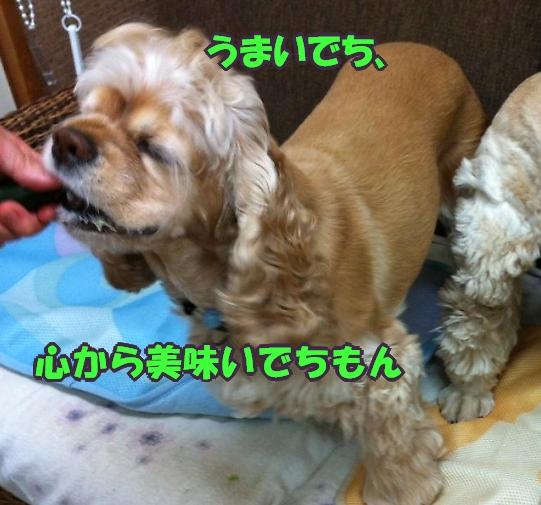 b0067012_14544176.jpg