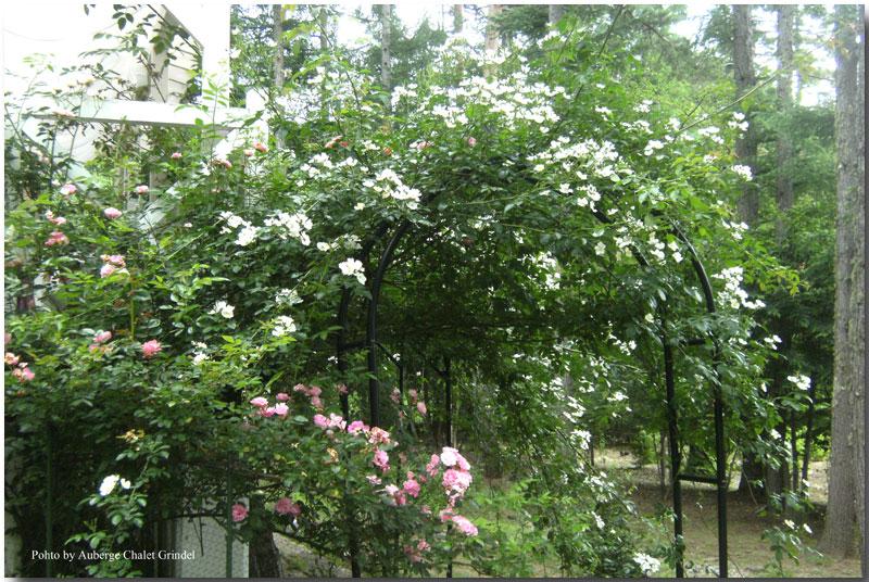 薔薇のアーチ と テラス_d0109415_16583226.jpg