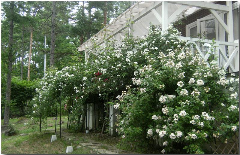 薔薇のアーチ と テラス_d0109415_16584519.jpg