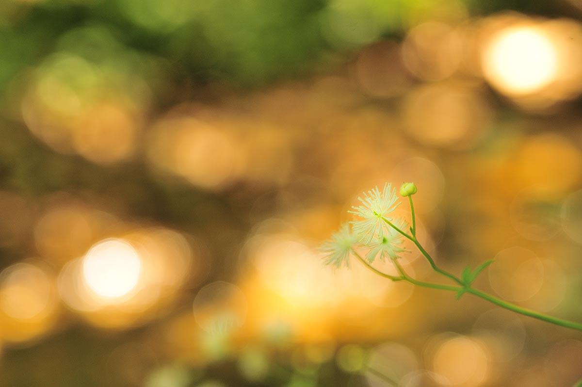 1000年の森_a0059621_15371959.jpg