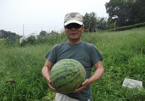 スイカの初収穫...味は数日後に!_b0137932_21312469.jpg