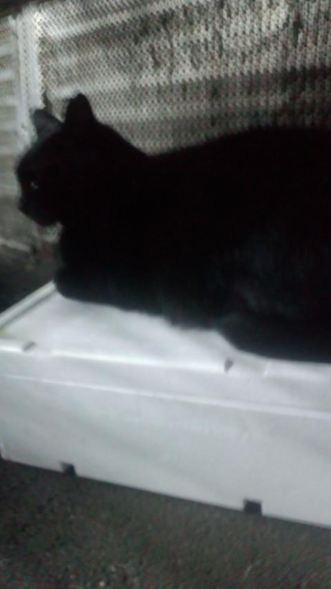 黒猫を路地で発見_e0114246_8101593.jpg