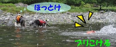 またまた川遊び_e0270846_1246118.jpg