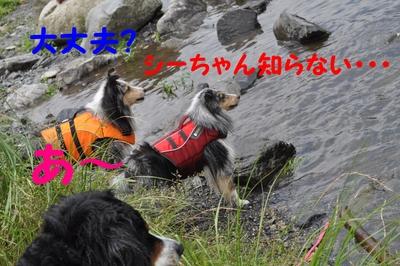 またまた川遊び_e0270846_1246279.jpg