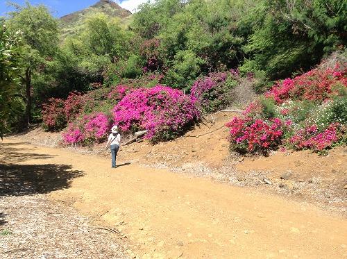 ハワイ☆2013~Koko Crater Botanical Garden(2)_f0207146_17104116.jpg