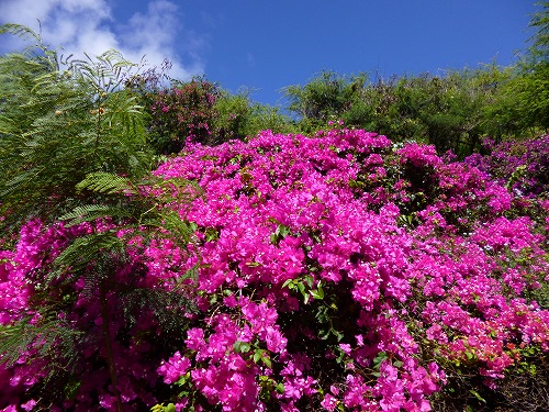 ハワイ☆2013~Koko Crater Botanical Garden(2)_f0207146_17112259.jpg