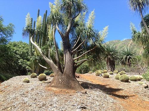 ハワイ☆2013~Koko Crater Botanical Garden(2)_f0207146_17114310.jpg