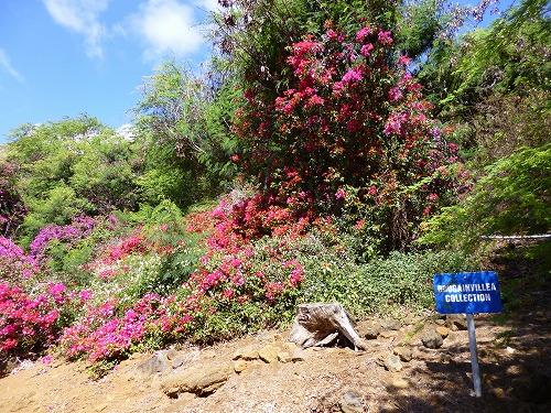 ハワイ☆2013~Koko Crater Botanical Garden(2)_f0207146_1711698.jpg