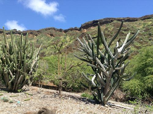 ハワイ☆2013~Koko Crater Botanical Garden(2)_f0207146_17121314.jpg