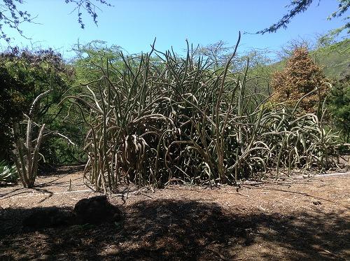 ハワイ☆2013~Koko Crater Botanical Garden(2)_f0207146_17122332.jpg