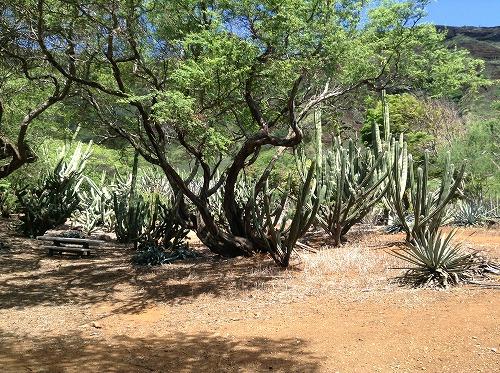 ハワイ☆2013~Koko Crater Botanical Garden(2)_f0207146_1712358.jpg
