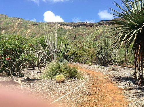 ハワイ☆2013~Koko Crater Botanical Garden(2)_f0207146_1712416.jpg