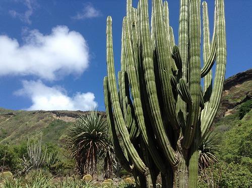 ハワイ☆2013~Koko Crater Botanical Garden(2)_f0207146_17124632.jpg