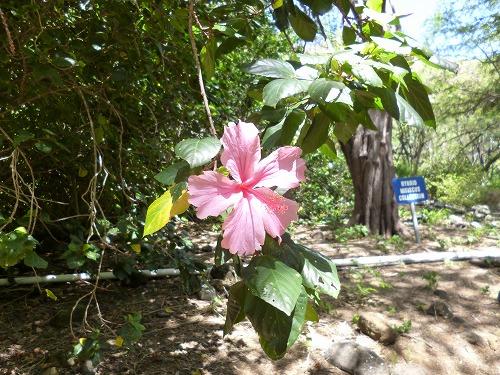 ハワイ☆2013~Koko Crater Botanical Garden(2)_f0207146_17131553.jpg