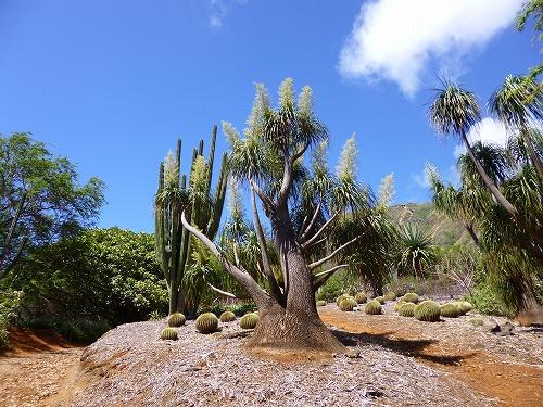 ハワイ☆2013~Koko Crater Botanical Garden(2)_f0207146_17132771.jpg